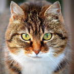 Cats meow thumbnail